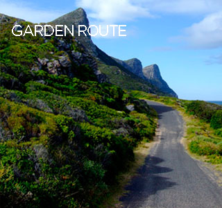 Garden Route - Roots